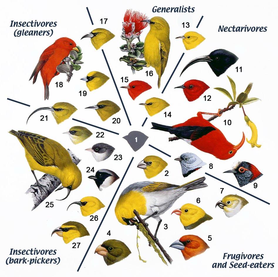 rain forest birds a study in adaptation hŘike o