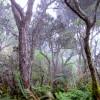 koa forest starr-100314-3454